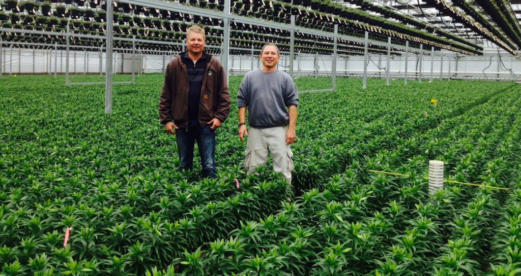 easter lily crop with marc and jeff1